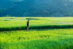 Asian Boy walking around rice terraces field at morning , Thailand