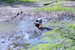 Asian boy with fishing tools in the swamp with water run dry, Finding fish in the small lake