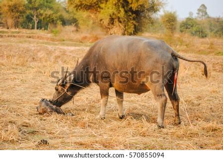 Asian singles in buffalo prairie