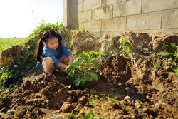 Asian child or kid girl gardener planting trees or people plant cork wood tree to sesbania grandiflora for vegetable herb garden and food on nature soil to natural growth and agriculture at fence home