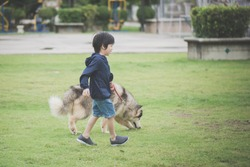 Asian child walking with a siberian husky dog in the park