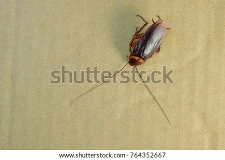 Asian Cockroaches in Thailand. Cockroach are in paper crates. #764352667