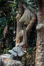 Asian elephant eats hay from suspended sack. Latin name - Elephas maximus