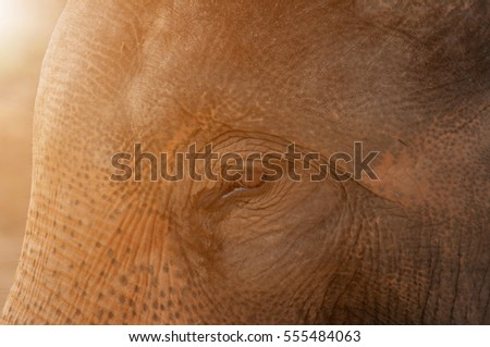 asian elephant eye photos close ...