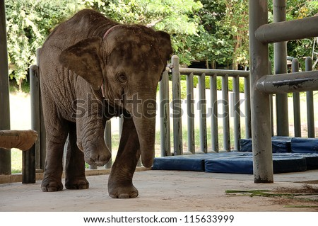 Asian Elephant hospital in Lampang, Thailand Chang Tung cart.