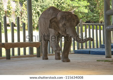 Asian Elephant hospital in Lampang, Thailand Chang Tung cart.