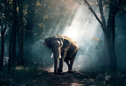Asian elephant in the jungle