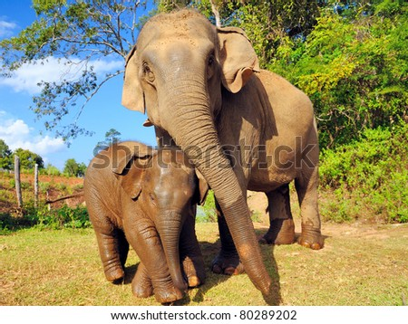 Asian elephant mother and baby,Thailand