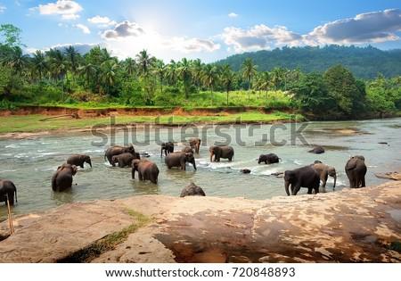 Asian elephants in the park of sunshine - Shutterstock ID 720848893
