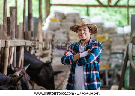 Asian farmer with Wagyu – Japanese shorthorn, portrait of a wagyu cow of Japanese origin in farm thailand