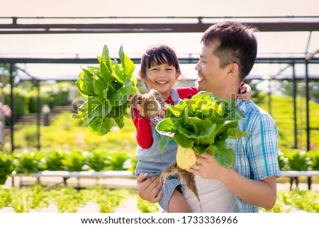 Asian father and daughter are helping together to collect the fresh hydroponic vegetable in the farm, concept gardening and kid education of household agricultural in family life style.