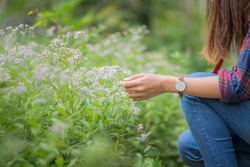 Asian Girl Enjoying Nature and Touching Wild Flowers with Left Hand with Watch on the Wrist