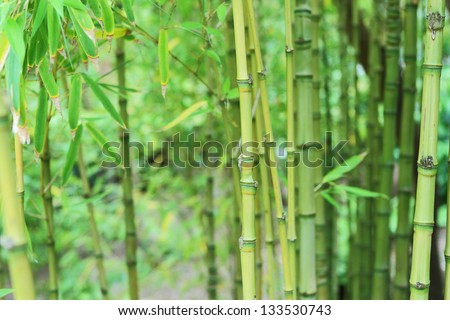 Asian influence garden background - stock photo