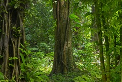 Asian jungle