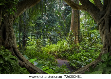 Asian jungle #726303481