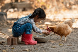 Asian little girl and young woman feed the chicken in layer and house farm eggs.  People kid woking outdoor stay home.