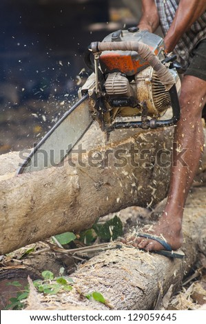 Asian lumberjack trimming a fir tree log with an old chainsaw
