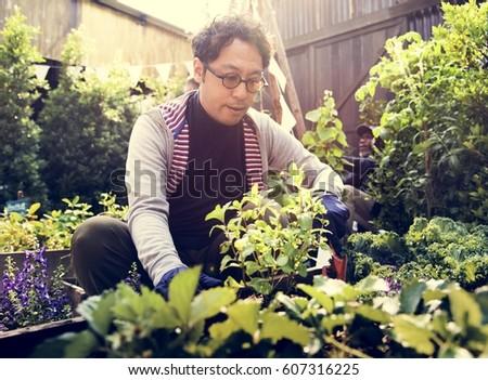 Asian man gardening transplanting outdoors #607316225