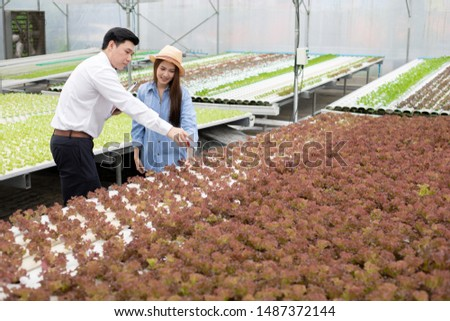 Asian man inspectors inspect and record the quality of organic vegetables in hydroponic farm, with female farmers providing guidance during the inspection for exportation in the market.