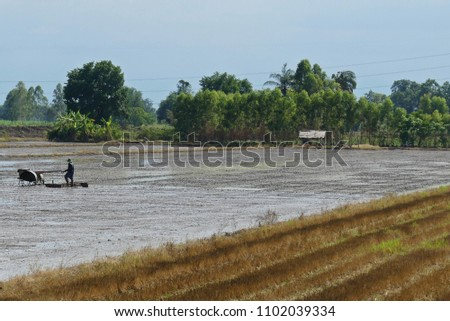Asian Man Using the Walking Tractor to Plow for Rice #1102039334
