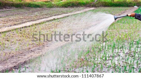 Asian man watering with the shower in the vegetables garden