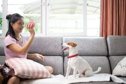 Asian owner holding pink ball for play with her jack russell dog on the sofa.Owner and pet playing together in living room.