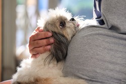 Asian pregnant woman holding a Shih Tzu dog