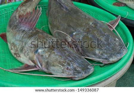 Asian redtail catfish sale at local market,Thailand (Hemibagrus wyckioides, Bagridae)