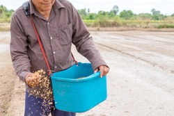 Asian senior farmer holding seed rice for sow planting at a rice farm