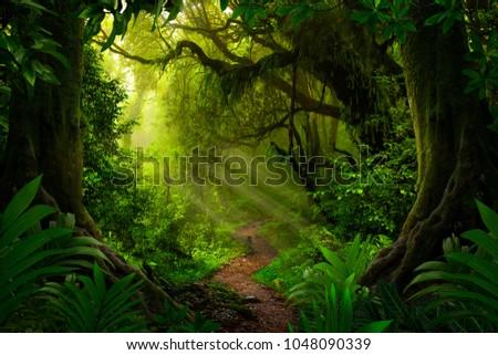 Asian tropical rainforest #1048090339