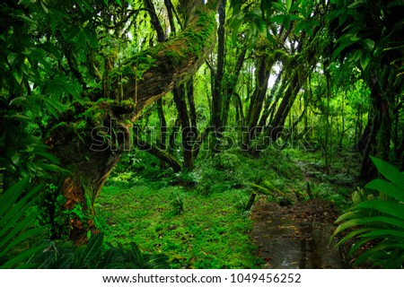Asian tropical rainforest #1049456252