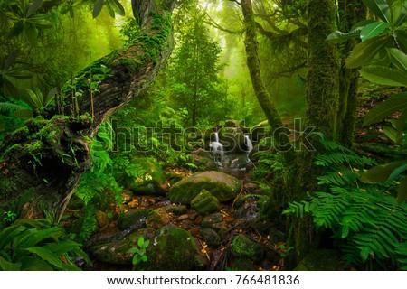Asian tropical rainforest #766481836