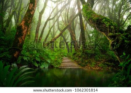 Asian tropical rainforest lake #1062301814