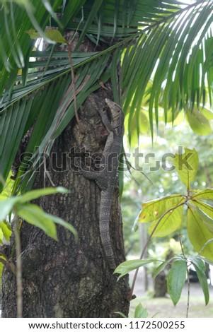 Asian water monitor, water monitor, or common water monitor (Varanus salvator) climbing a tree in Bangkok's park Thailand #1172500255