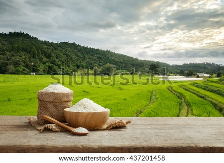 Asian white rice or uncooked white rice with the rice field background #437201458