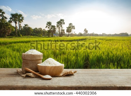 Asian white rice or uncooked white rice with the rice field background #440302306