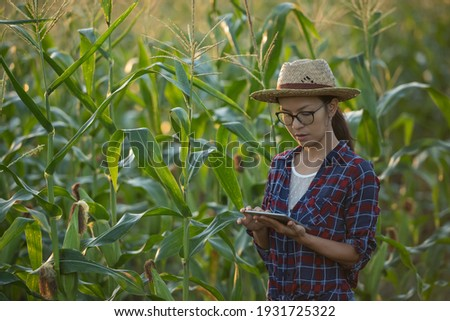 asian woman farmer with digital tablet in corn field, Beautiful morning sunrise over the corn field. green corn field in agricultural garden and light shines sunset in the evening Mountain background