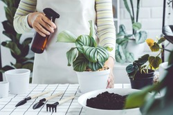 Asian Woman hand spray on leave plants in the morning at home using a spray bottle watering houseplants Plant care concept