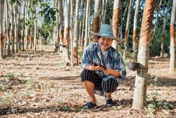 Asian woman smart farmer agriculturist happy at a rubber tree plantation with Rubber tree in row natural latex is a agriculture harvesting natural rubber in white milk color for industry in Thailand