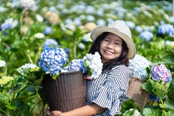 Asian woman smiling happily the blossoming hydrangea in the garden. Young woman is working in  blooming hydrangea flowers garden, Gardening in hydrangea bushes.