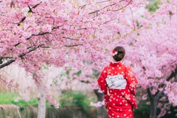 Asian woman wearing kimono with cherry blossoms,sakura in Japan.