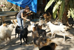 Asian women feeding dogs.donations stray dogs.