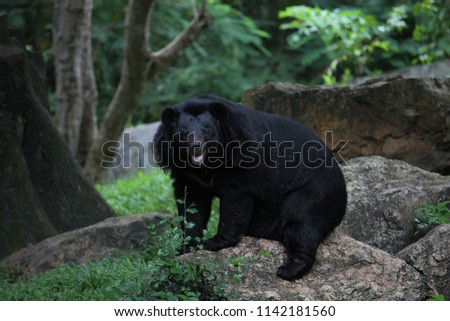 Asiatic black bear #1142181560