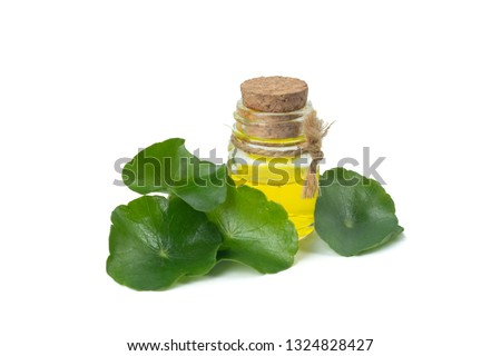 Asiatic Leaf Herb gotu kola, indian pennywort, centella asiatica, isolated on white background. Extracted into capsules or essential oil. ayurveda herbal medicine inhibited or slowed growth of cancer