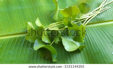 Asiatic leaves on the green leaves of banana leaves.