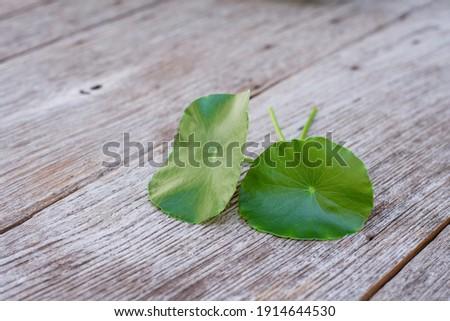 Asiatica centella leaf (Gotu Kola leaves ) isolated on wooden table background. Zdjęcia stock ©