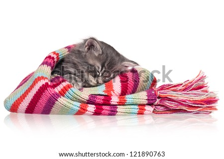 Asleep cute little kitten in a scarf isolated on white background