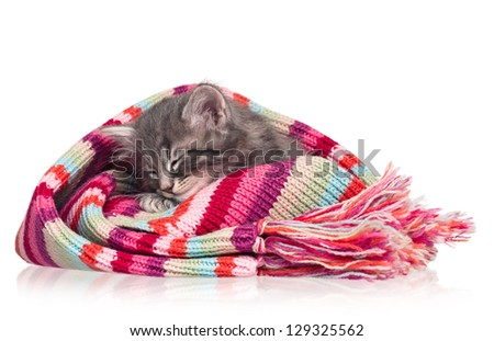 Asleep little kitten in the knitted scarf isolated on white background