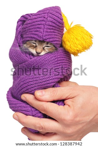Asleep little kitten on a woman hands isolated on white background