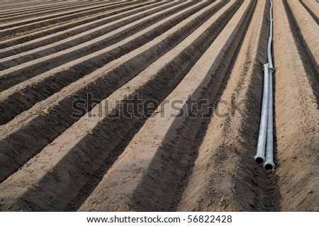 Asparagus field with irrigation pipes in springtime